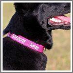 Hundehalsbånd med navn og tlf