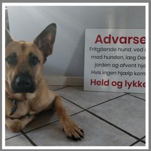 Skilte-tekst-sjov-hund
