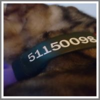 Navn og tlf på GPS halsbåndet til hunden og katten